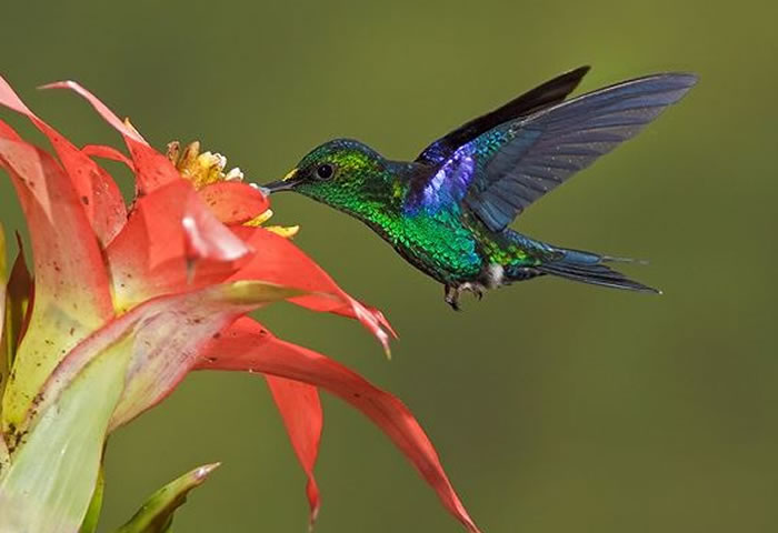 beautiful creatures - humming bird (11)