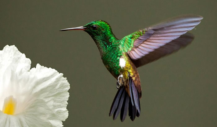beautiful creatures - humming bird (13)
