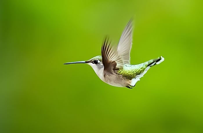 beautiful creatures - humming bird (14)