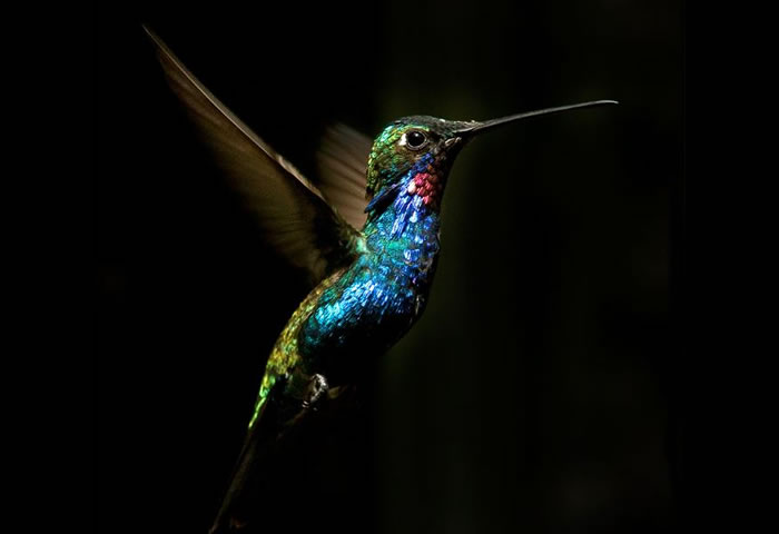 beautiful creatures - humming bird (15)