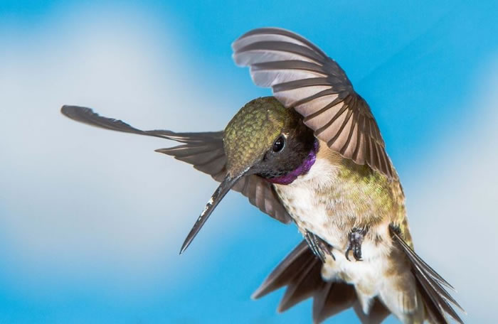 beautiful creatures - humming bird (16)