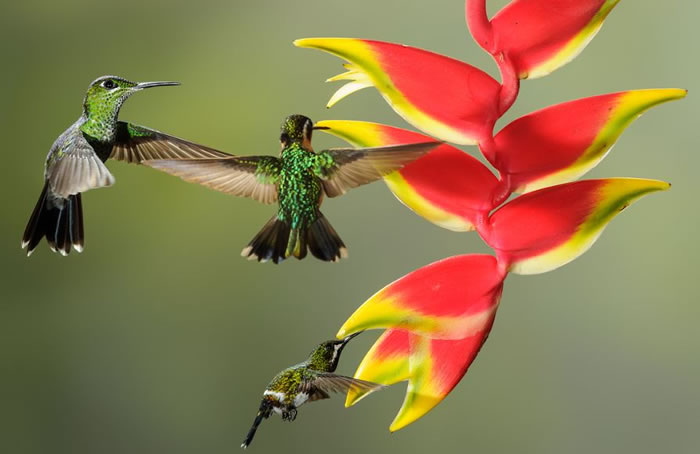 beautiful creatures - humming bird (18)