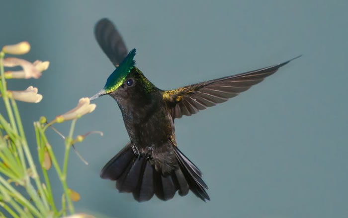 beautiful creatures - humming bird (19)