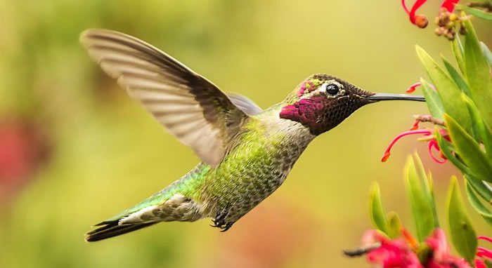 beautiful creatures - humming bird (5)