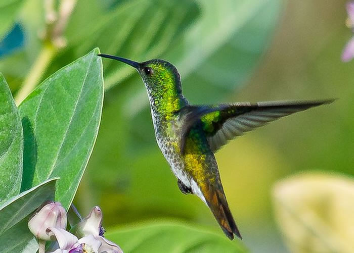beautiful creatures - humming bird (7)