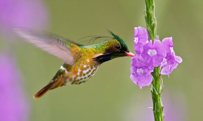 beautiful creatures - humming bird (8)