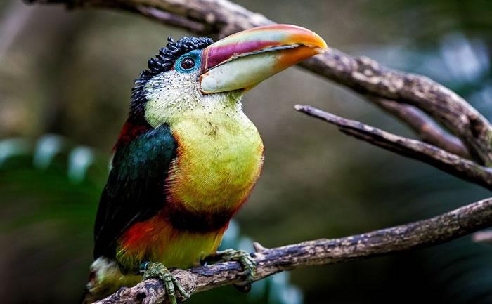 beautiful creatures - toucans (1)