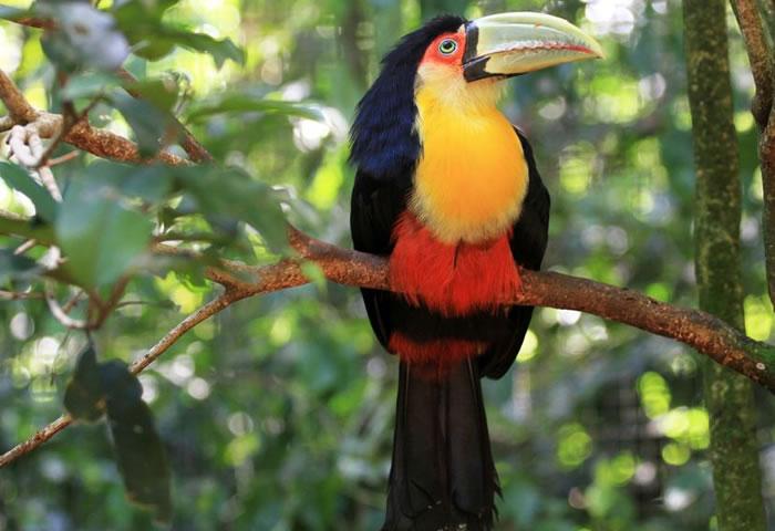 beautiful creatures - toucans (10)