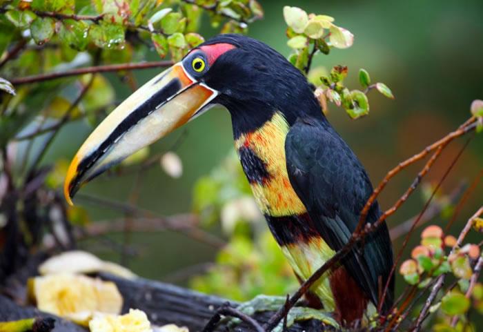 beautiful creatures - toucans (4)