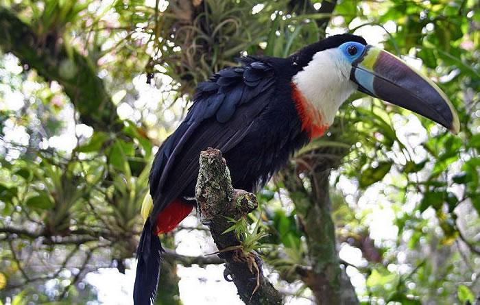 beautiful creatures - toucans (5)