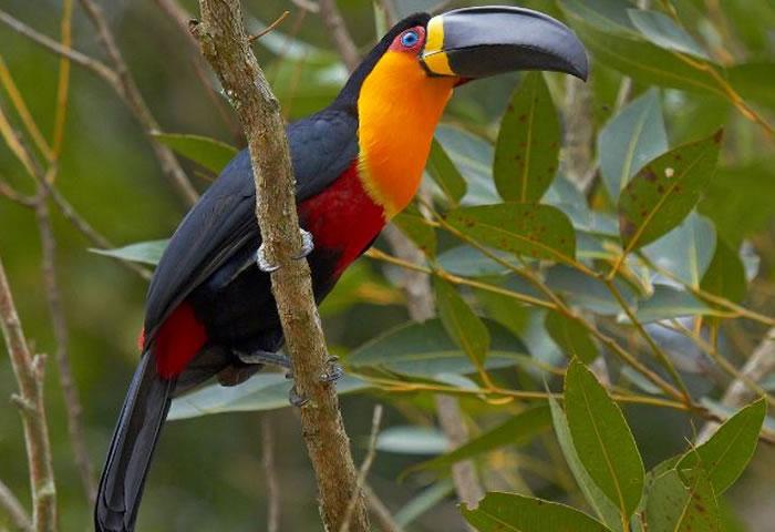 beautiful creatures - toucans (6)