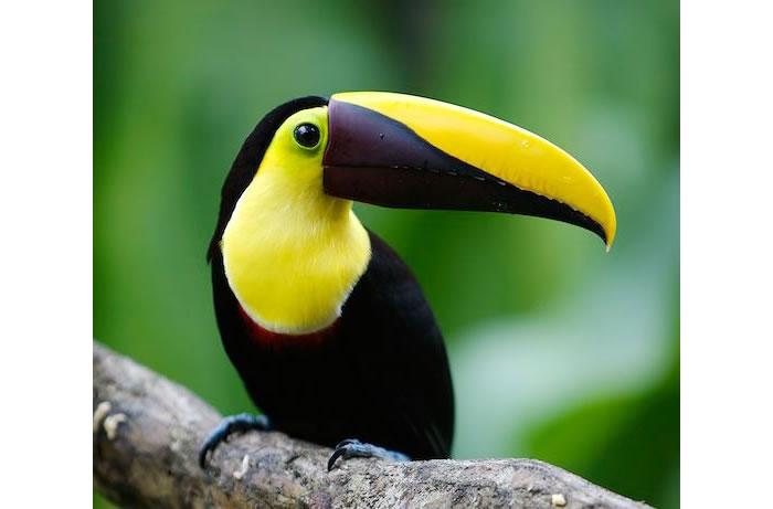 beautiful creatures - toucans (7)