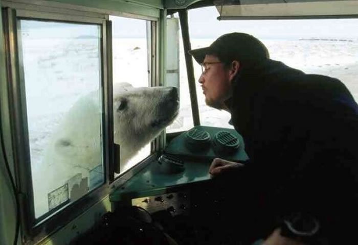 Today's daily wtf what harm could come from kissing a wild polar