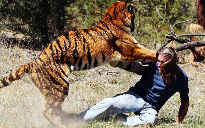 how to survive a tiger attack 2