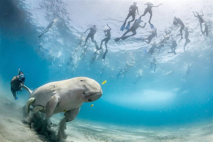 Natural History Museum Photographer Of The Year