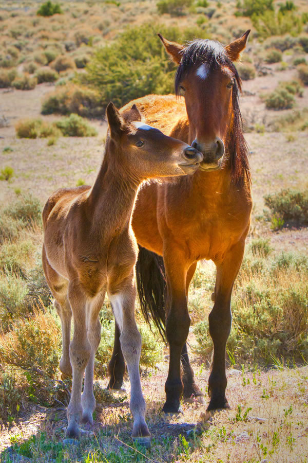10 Amazing Pictures Of Horses In The Wild