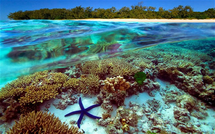 places to visit before you die great barrier reef (1)