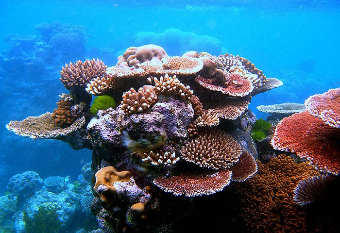 places to visit before you die great barrier reef (10)