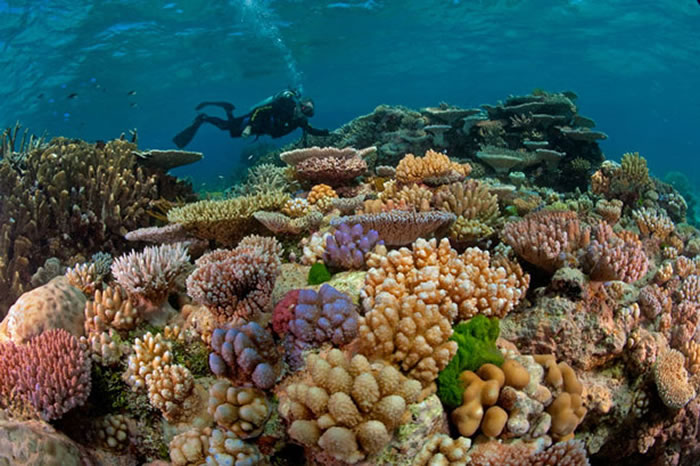 places to visit before you die great barrier reef (12)