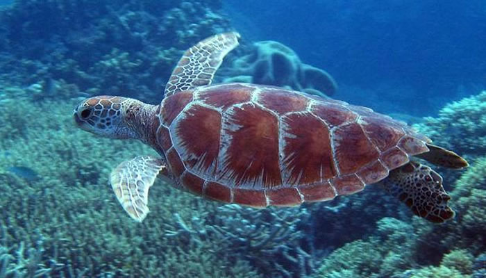 places to visit before you die great barrier reef (14)