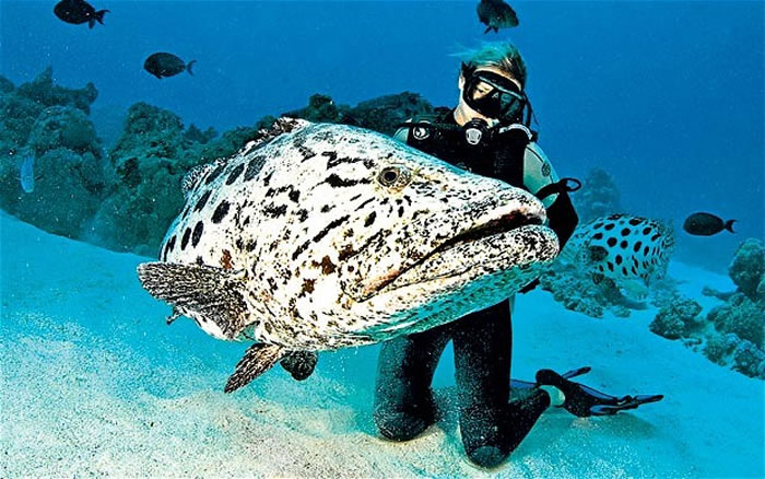 places to visit before you die great barrier reef (6)