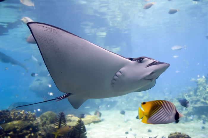 places to visit before you die great barrier reef (8)