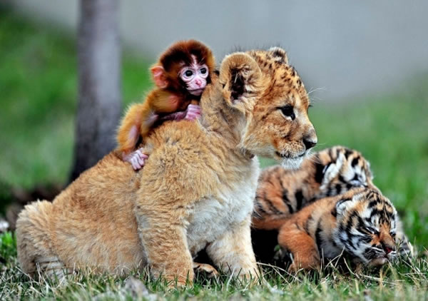 20 Cutest Animals Pictures That Will Make Your Heart Melt 10