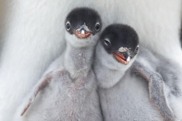 20 Cutest Animals Pictures That Will Make Your Heart Melt 3