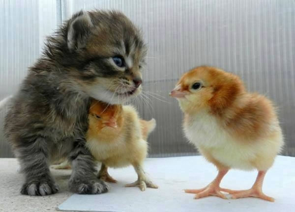 20 Cutest Animals Pictures That Will Make Your Heart Melt 5