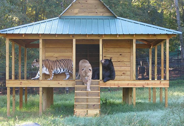 3 Of The Most Dangerous Predators Are Best Friends At Noah's Ark Zoo 1