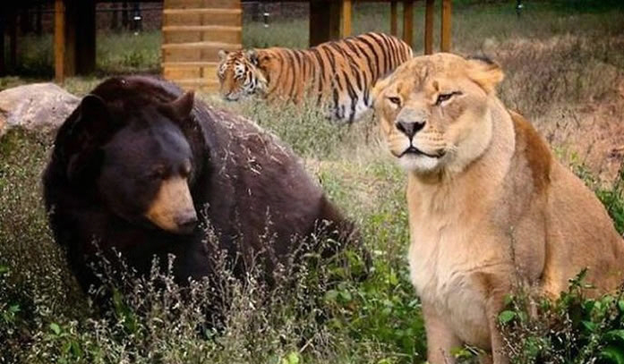3 Of The Most Dangerous Predators Are Best Friends At Noah's Ark Zoo 2