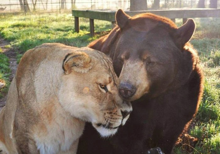 3 Of The Most Dangerous Predators Are Best Friends At Noah's Ark Zoo 4