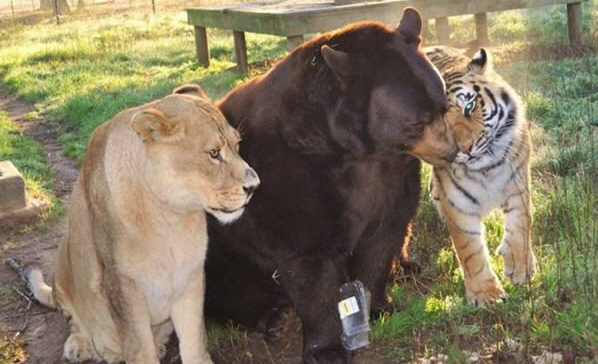 3 Of The Most Dangerous Predators Are Best Friends At Noah's Ark Zoo