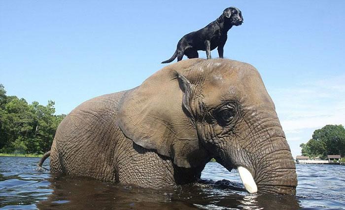Elephant And Dog Friends At Myrtle Beach Safari 1