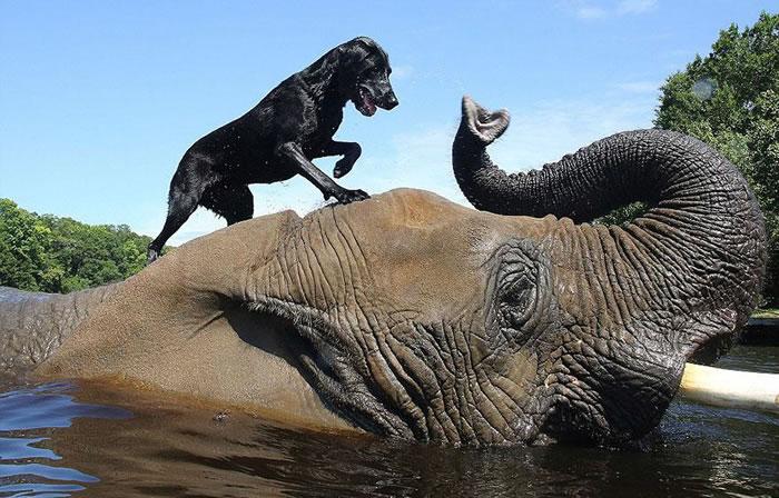 Elephant And Dog Friends At Myrtle Beach Safari 2