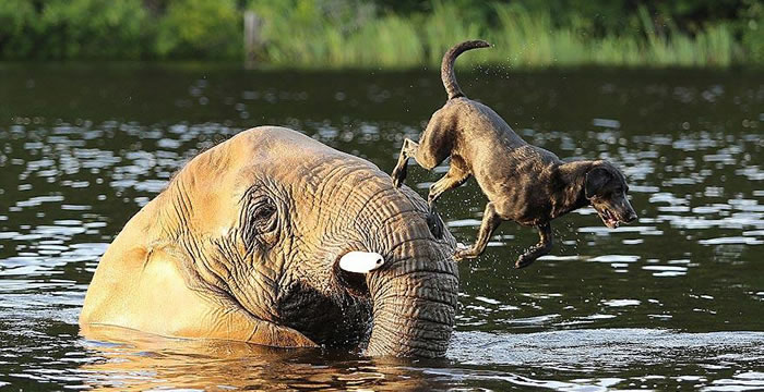 Elephant And Dog Friends At Myrtle Beach Safari 4
