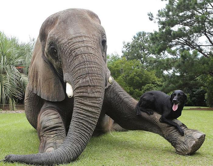 Elephant And Dog Friends At Myrtle Beach Safari