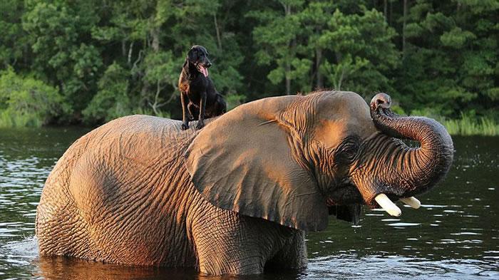 Elephant And Dog Friends At Myrtle Beach Safari 6