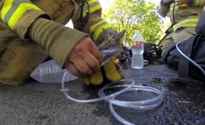 Firefighter Rescues Kitten From Fire