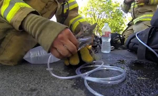 Firefighter Rescues Kitten From Fire