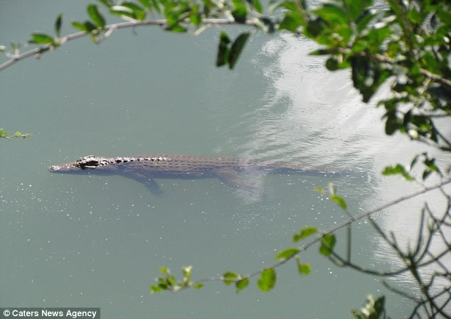 Man Wakes To Find 8 Foot Crocodile Hiding Under His Bed 3