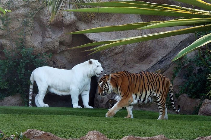 albino animals (1)