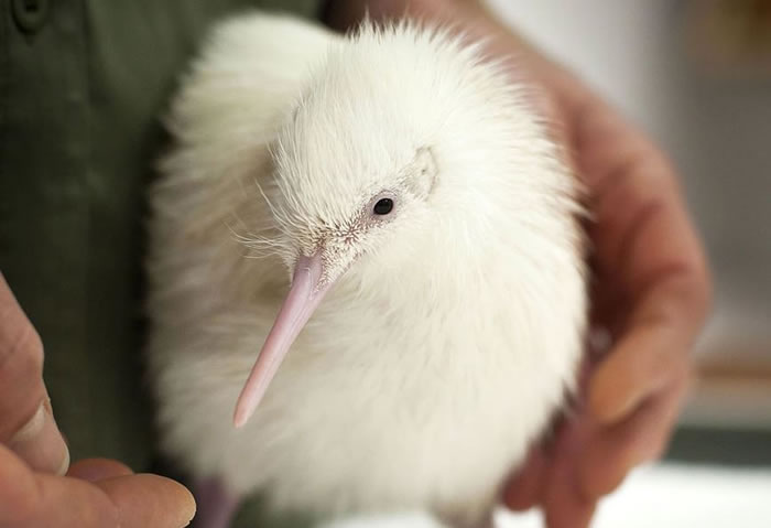 albino animals (16)