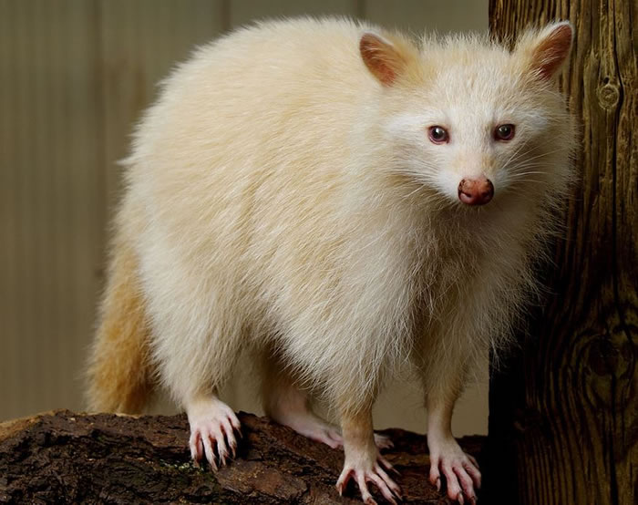 albino animals (20)