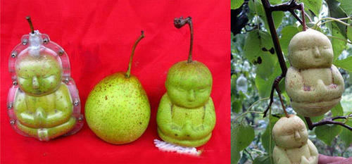 buddha shaped pears 4