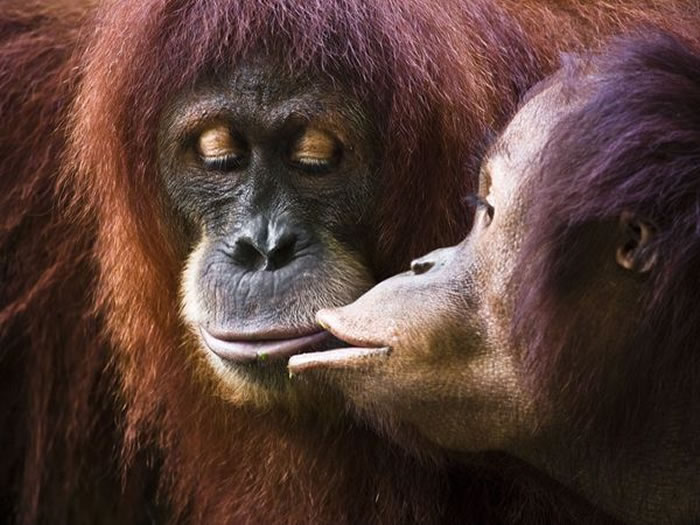 Daily Cuteness 15 Cute Animal Pairs From National Geographic