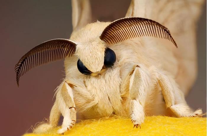 macro insect - fur (1)