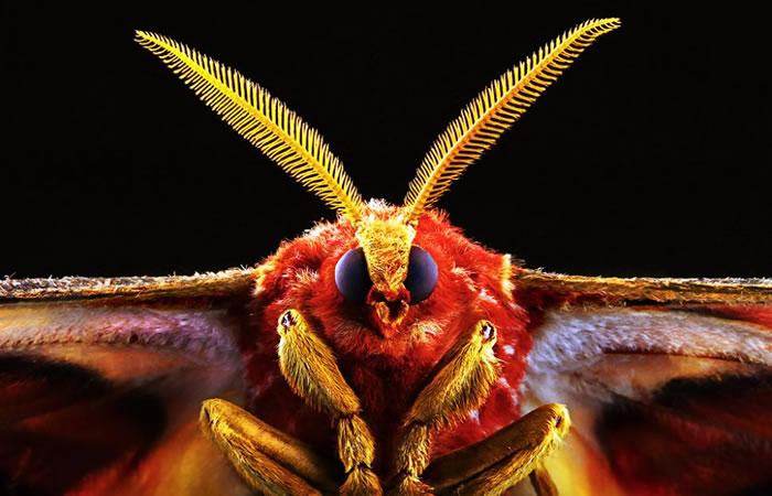 macro insect - fur (2)