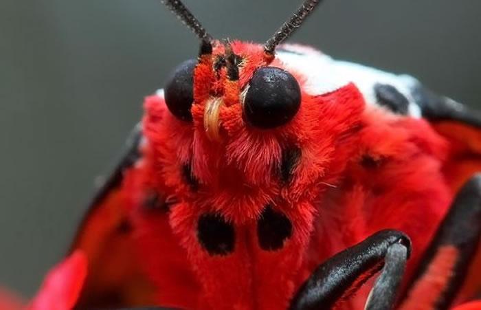 macro insect - fur (4)