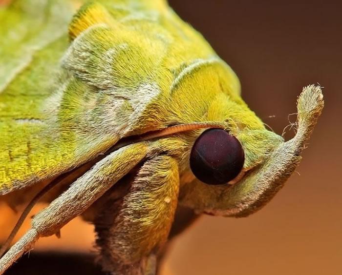 macro insect - fur (6)